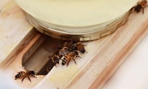 Как правильно выбрать или сделать кормушки для пчел своими руками