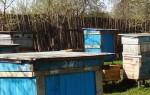 Метод Цебро в пчеловодстве