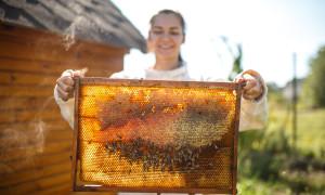 Пчеловодство как бизнес или как разбогатеть за счет пчел