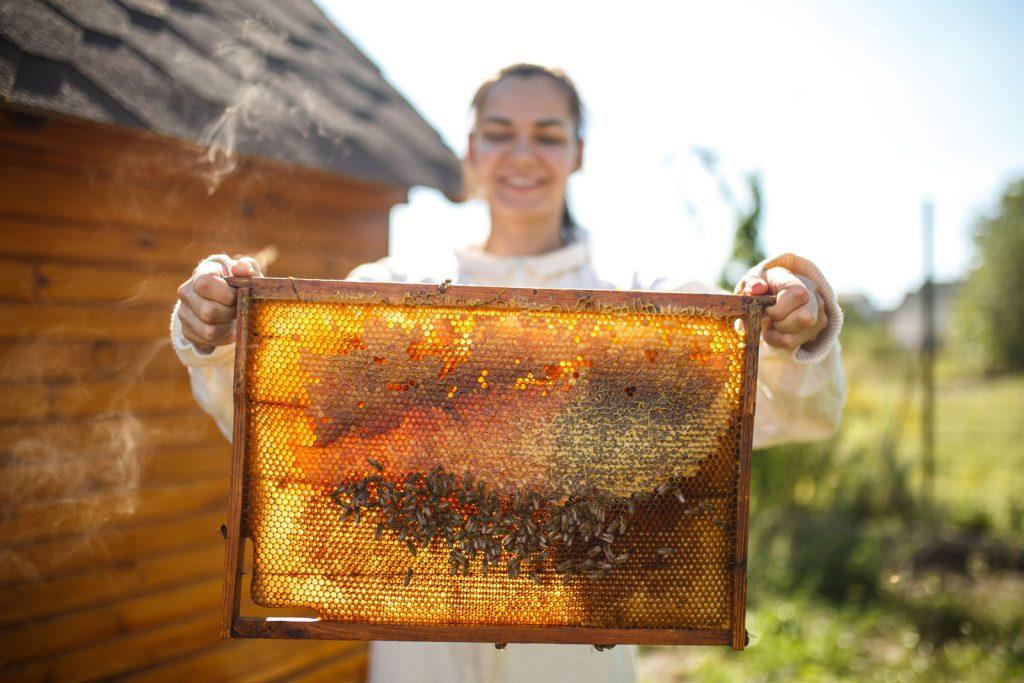 Как правильно поймать и удержать рой пчел